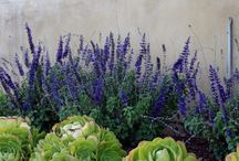 Landscaping / by Catherine McDonald | wanderlustography