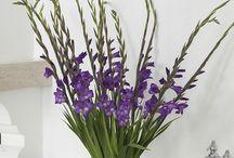 Bloemen ter inspiratie / Bloemen houden van mensen, wij houden van bloemen. Dit hoofdstuk is ter inspiratie