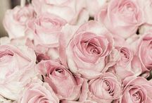 inspire // roses.