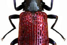 Bugs I like
