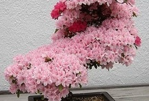 gardens. bonsai