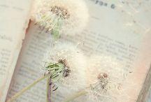 vinta / by Amanda Fairy