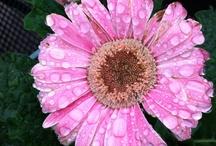 Flowers & Gardening / by Donna W
