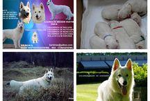 Dzsemil's puppy-born 21.06.2015