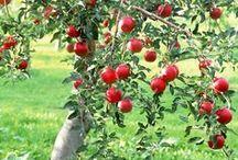 Плодовые деревья обрезка, уход