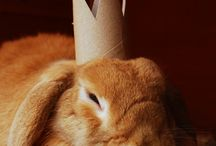 Animals with paper tubes
