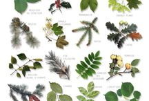 Plantes-nature