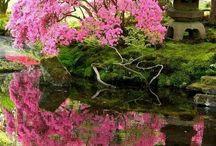 kert, növény, természet