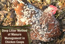 GARDEN | Chickens / Information on owning and caring for chickens in my urban garden | chicken care | chicken coops | chicken run | chicken compost | chicken manure | owning chickens | collecting eggs