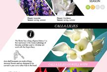 Wedding Infographics / by WeddingPhotoUSA
