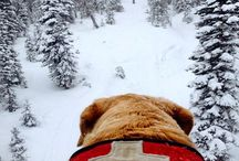 Avy Dogs of Wolf Creek / by Wolf Creek Ski Area