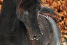 Моя Любовь#horses