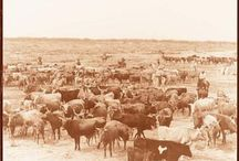 Old West Cattle Drives