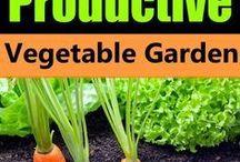 Project veggie garden