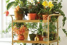 carrinho com plantas