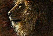 львы тигры