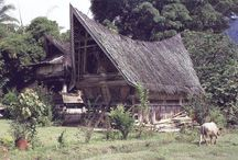 Traditional House of Indonesia