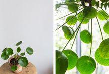 Växter ❤️