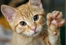 Como Cuidar Gatos
