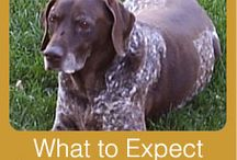 In-Home Pet Euthanasia / What to expect with In-Home Pet Euthanasia