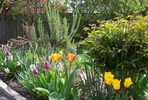 My secret garden / Flowers, plants and trees..