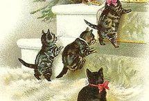 cats gatti