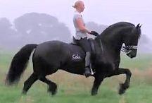 animals - horses & foals