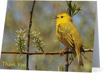 Bird & Nature Photography / Items featuring my photography for sale.  I specialize in birds and nature. / by Karen - Cat's Eye Originals