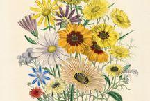 ilustratii botanice