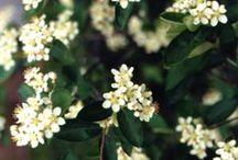 native plants northeast usa / by Ryla Daly