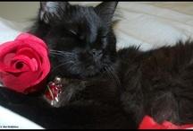 Lovey Dovey Valentine Cats