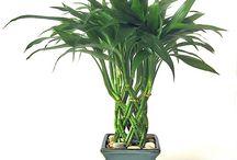 PLANTAS / REFERENCIAS DE PLANTAS