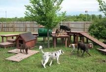 Dog yard ideas