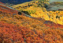 Cozy Fall / Autumn Mood