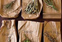 Growing Herbs / by SeedsNow.com