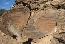 Stromatolites, cut in cross-section.