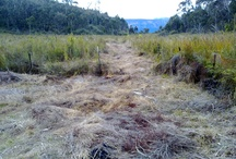Peat Swamp Damage/Erosion / picture of erosion damage in swamps in the blue Mountains, generally resulted from increased urban runoff