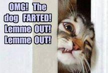 # funny