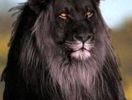 black animals