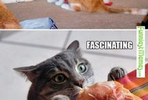 tudós maccsok