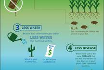 Aquaponics - Benefits