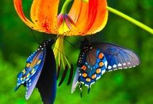 Beautiful / by Paula Lewis