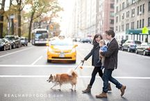 Dogs of NYC