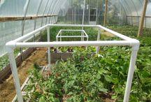 tomato trellis The Living Farm