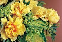 Easter Florals - Shilling
