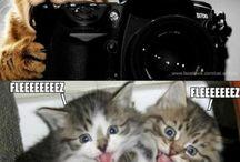 Funny Pet Pix