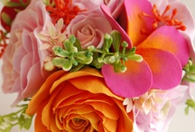 Blooms / by Lauren Johnson