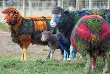Sheep Farming Ideas / by Holly Walcutt