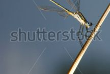 Shutterstock - Sales - April 2015. / Pictures sold for April at stock photo site , shutterstock.