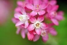 Pretty Flowers / by Kathleen Murphy